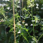 biobestrijding - Nautilus Organic