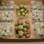 kiwibes-fruitweelde-2015