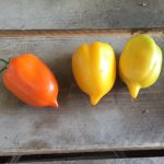 Yellow San Marzano (pepper tomato)